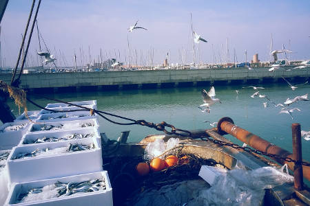 Pesca - Pesce Fresco a Rimin per l'Hotel Ombretta Mare